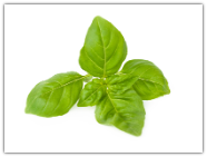 Basil ct. methyl chavicol Essential Oil