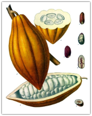 Cocoa Absolute, France