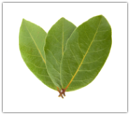 Bay Laurel Essential Oil, Laurel Leaf
