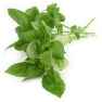 Basil ct. citral Essential Oil, Lemon
